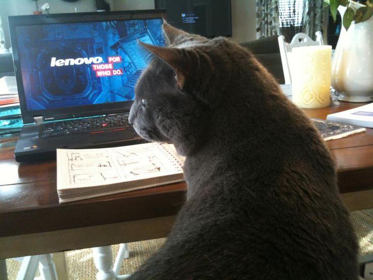 Un gato y mi Lenovo,¡la mejor compañía para un día de trabajo desde casa!  www.lenovo.com/ar