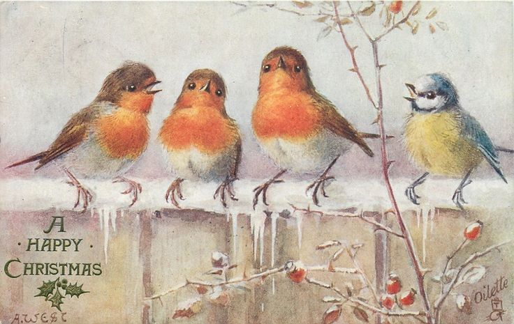 ■ Tuck DB... three robins & bluetit on snowy fence | artist: A. West, (first used 08/12/1906)