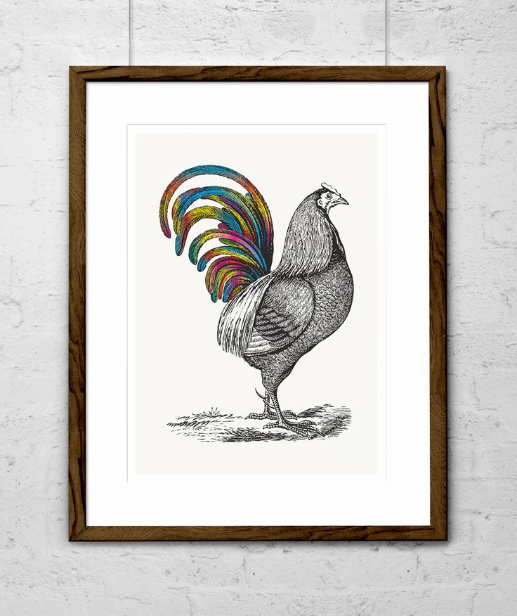 Rainbow Rooster - he'll add a splash of colour to your walls! $40 from www.needsandwishesart.com