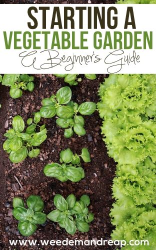 A Beginners Guide to Starting a Vegetable Garden