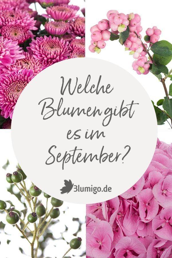Rosa Blumen Im September