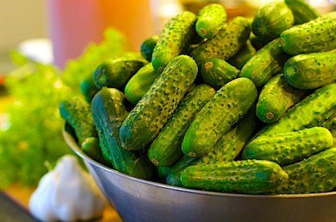 Making Dill Pickles   Mixed Greens Blog