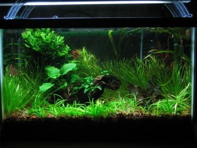 16 best hydro grow images on pinterest for Growing plants in water with fish