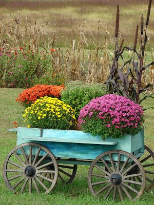 Colorful chrysanthemums in a vintage wagon