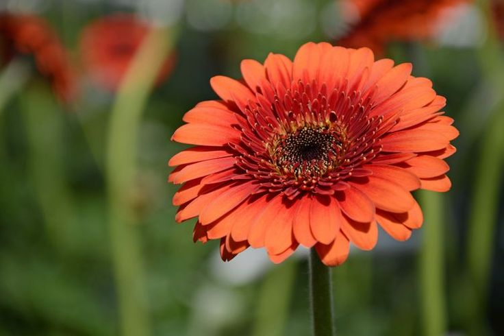 Plants with Daisy-Like Flowers that You Can Grow