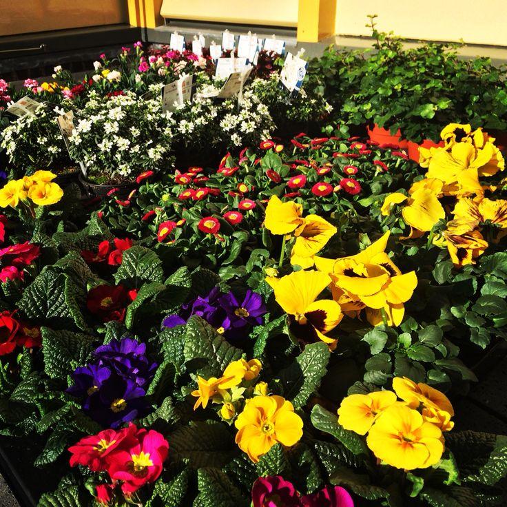 Voorjaarsbloemen, spring flowers