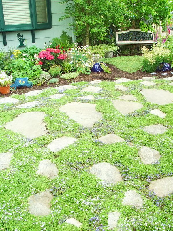 17 Best Images About Landscape Ground Cover On Pinterest