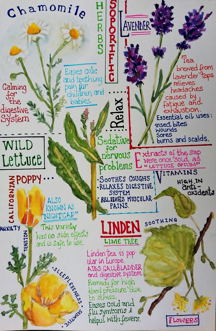 Palma Rea's journal entry of herbs and plants