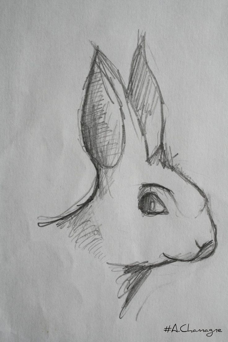 Lapin passion of drawing A Chamagne