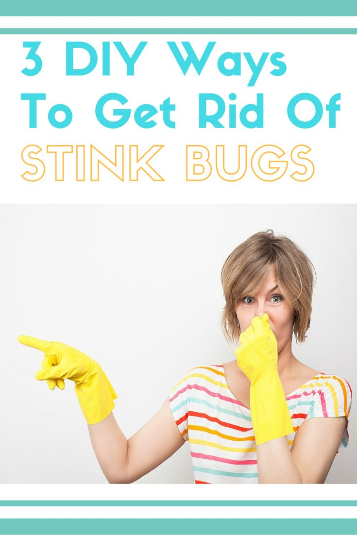 3 diy ways to get rid of stink bugs in your home stink