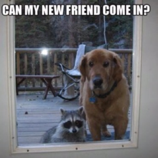 Cat, Dogs, Pets, Raccoons, Funny, My Friends, Knock Knock, New Friends, Animal