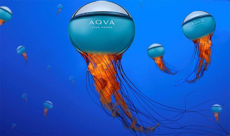 Tyhle medúzy Vás nepopálí. Naopak z jejich návštěvy budete mít pouze užitek a radost. :-)