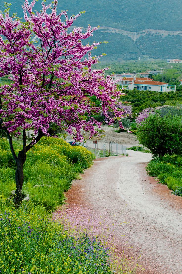 Spring at Epidaurus. Greece