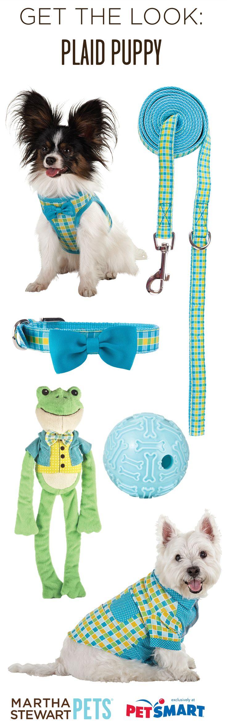 Get The Look: Plaid Puppy with #MarthaStewartPets at #PetSmart! #preppy