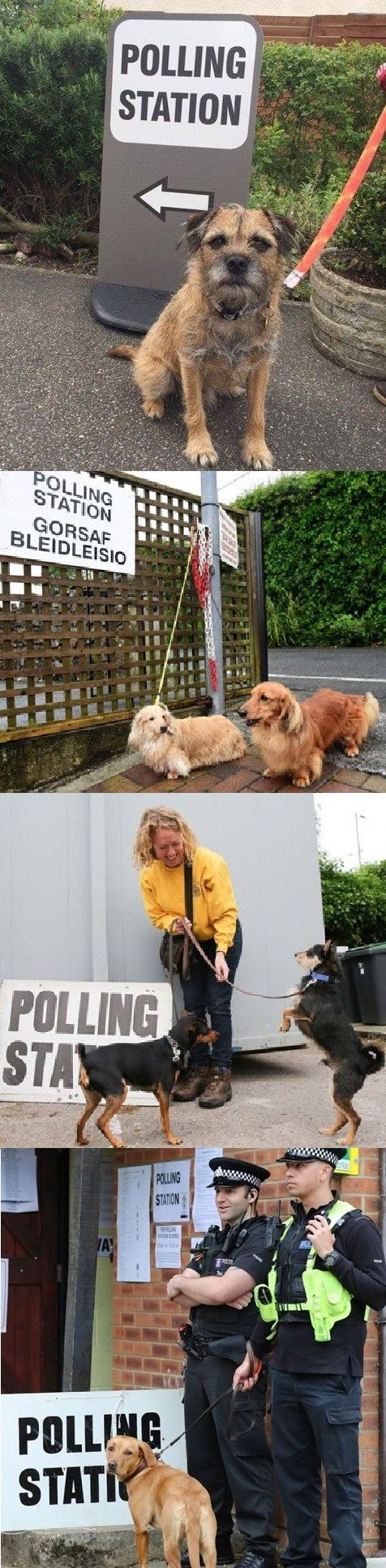 Dogs At Polling Stations Craze Takes New Turn As Horses, Rats And Cats Get In On The Act