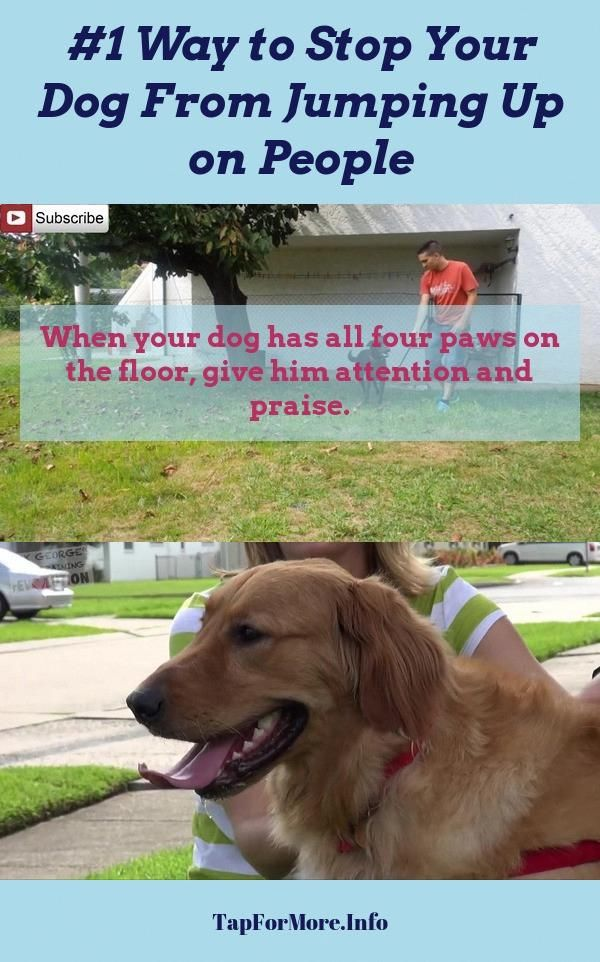 Stop Dog Jumping And Aggressive Dog Check The Pic For Lots Of