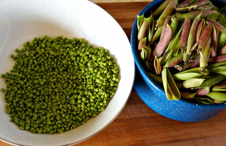 Wild peas grow on Alaskan beaches. they super sweet and yummy