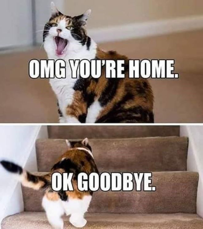 Everyone Knows Caturday Is The Best Day 24 Cat Memes That Prove It Cat Memes Cats Funny Cat Memes