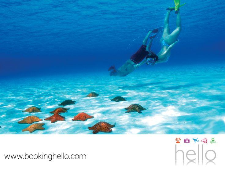 VIAJES DE LUNA DE MIEL. El Cielo, ubicado en Cozumel, es uno de los mejores lugares para practicar snorkeling. Debido a la poca profundidad de sus aguas, este sitio es ideal para aquellos que no tienen tanta experiencia nadando y tú y tu pareja, podrán maravillarse con un fondo lleno de estrellas marinas, un espectáculo que no podrán perderse. En Booking Hello, te ofrecemos accesibles tarifas en packs all inclusive al Caribe mexicano, para que vivan un viaje de luna de miel inigualable…