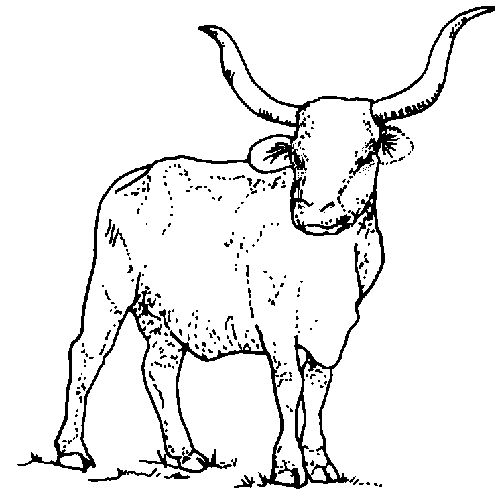 pg 8 large mammal longhorn 1995 google model images coloring pages for kidstexas