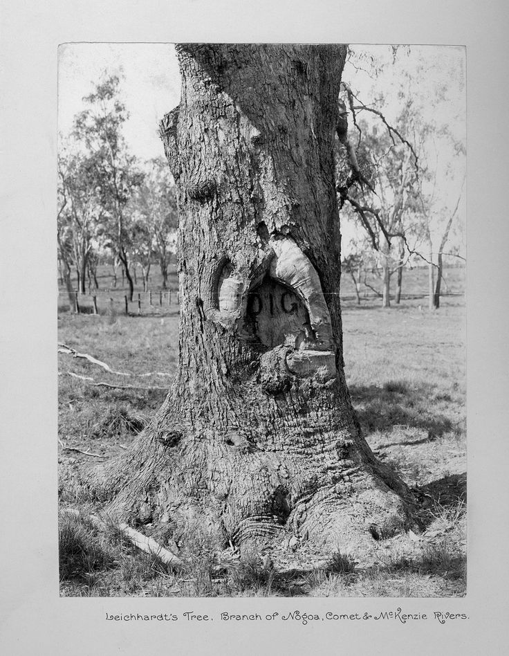Leichhardt's Dig Tree in Comet QLD
