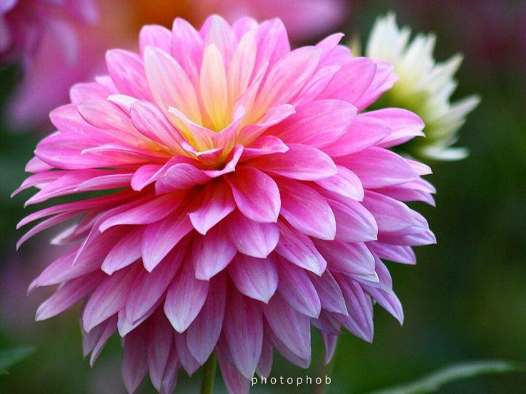 25 Best Ideas About November Birth Flowers On Pinterest