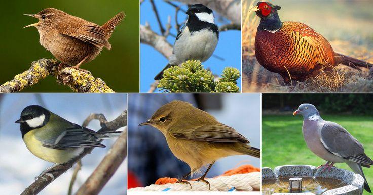 La liste alphabétique des chants d'oiseaux. Une collection complète des chants d'oiseaux français.