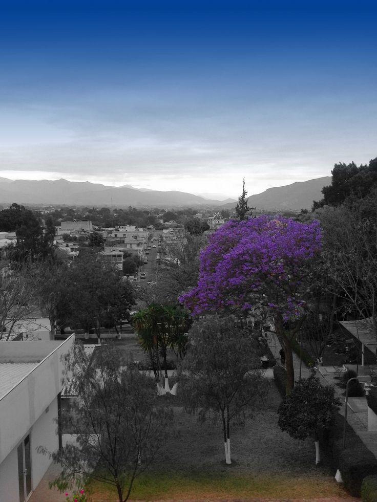 Vista de la ciudad desde el Edificio Crespo.
