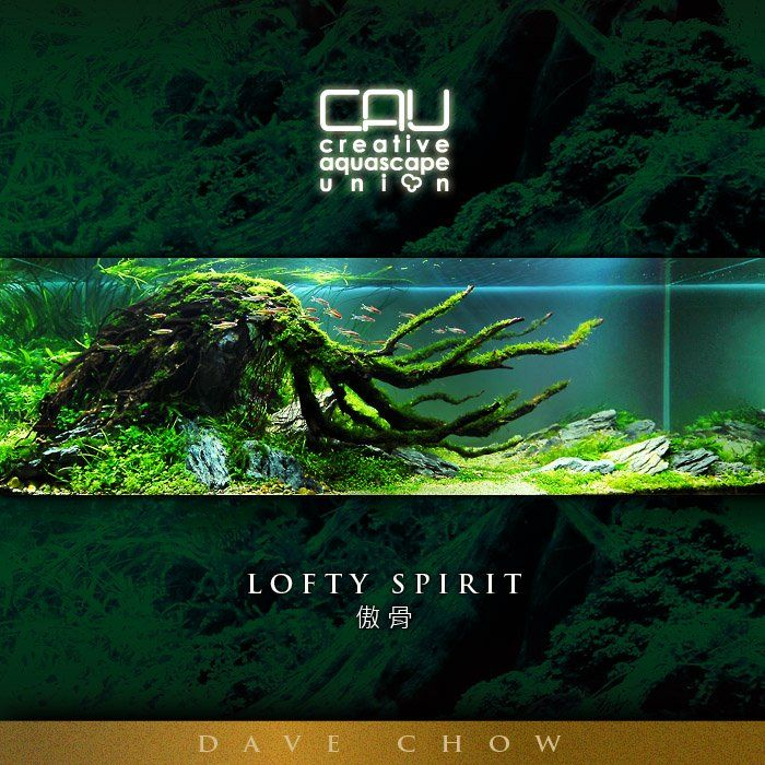 CAU ???? - Lofty Spirit Tanks & Aquariums Pinterest