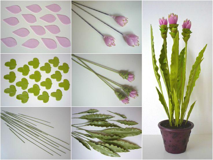 Curcuma, siam tulip - Kurkuma, sziámi tulipán…