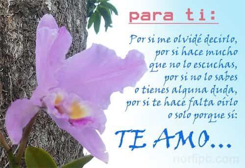 Imagenes De Amor Lindas Y Tiernas Con Frases!