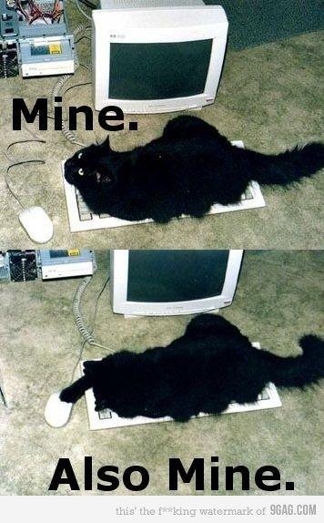 HeheheLaugh, Funny Animal Pictures, Funny Pictures, Funny Cat, Humor, Mine, Things, Kitty, Giggles