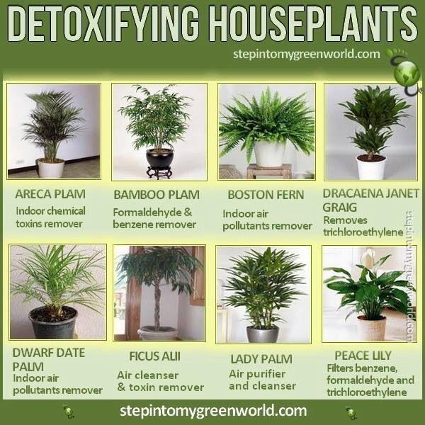 Detoxifying House Plants