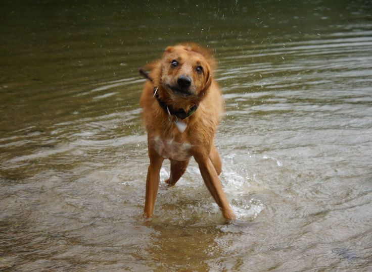 Wisst ihr wieviele Hunderassen eine schwarze Zunge haben? Das und weiteres unnützes Hundewissen findet ihr bei FrauVela! 😅