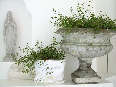 Would be so easy to put these potted plants in those cheap plastic urns you can get at the dollar store. Paint them, seal them, plant them....