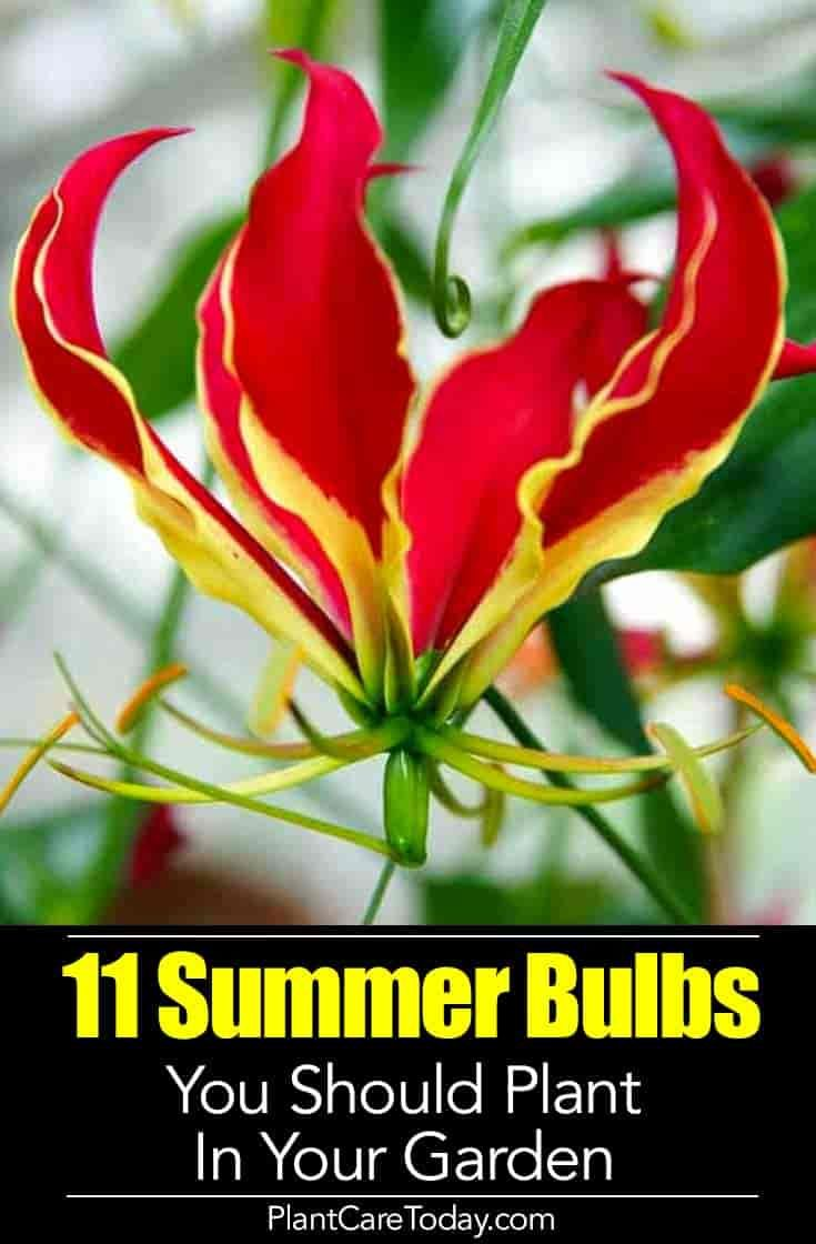 20 Blooming Summer Bulbs You Should Plant In Your Garden Summer