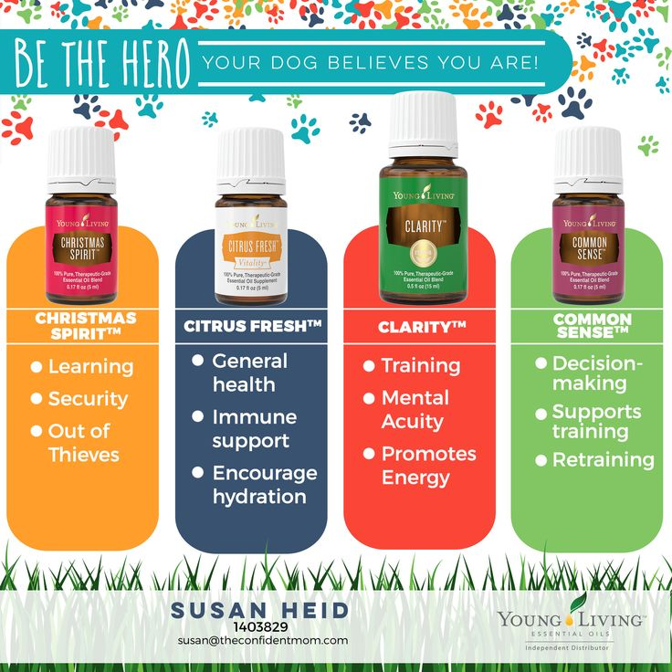 Hero Essential Oils for Dogs: Christmas Spirit, Citrus Fresh, Clarity and Common Sense I Young Living I Immune Support I Mental Clarity I Energy