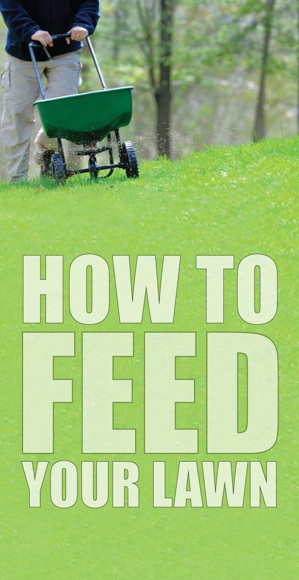 Learn how to feed your lawn properly with just a few simple steps! #lawn #fertilizer #feed #grass #tips