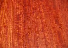 Eucalyptus camaldulensis - Wikipedia