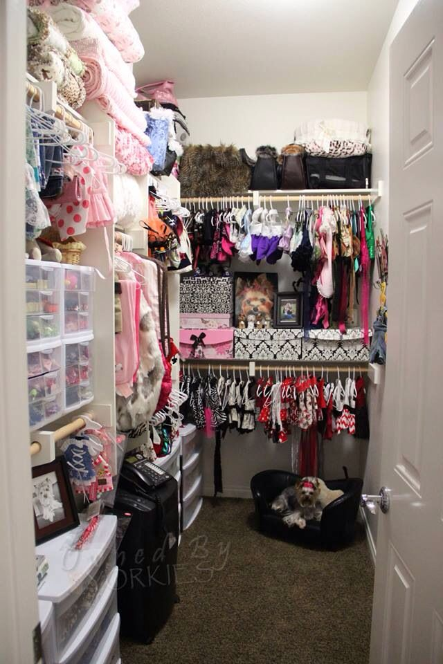 Yep.... Yorkie room. Mine isn't quite this big... glad to know there is someone out there worse than I am....