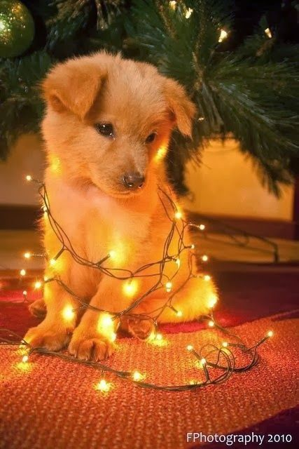 This little puppy is glowing with excitement!!!!!!!!!!