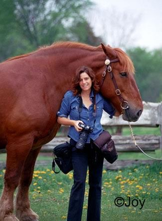 22 : Shawn Hamilton - Editorial and Stock Equine Photographer