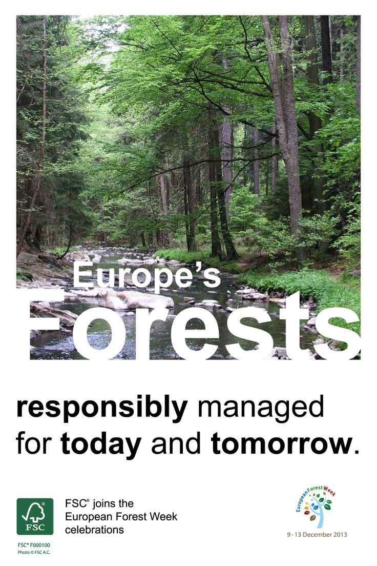 #FSC joins the #EFW2013 celebrations!  Europe's forests – responsibly managed for today and tomorrow.   #FSC #certification can positively impact #forest #workers and their #communities, and #economic and #environmental conditions in the forest, while FSC advocacy can create and support positive shifts in global environmental governance processes.