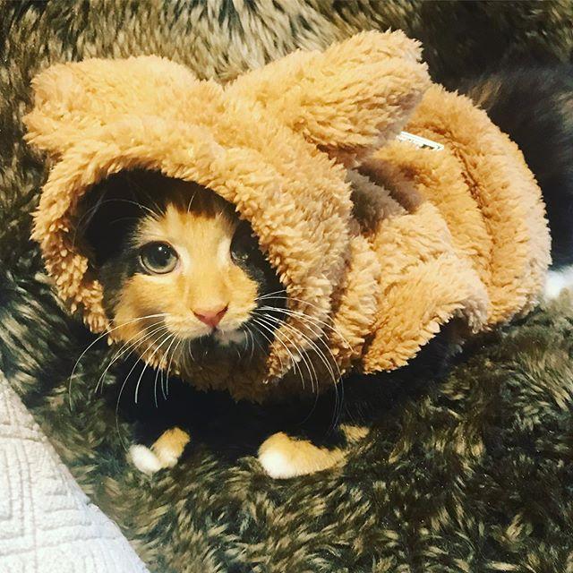 No Photo Description Available Regram Via Generated Tabby Cat