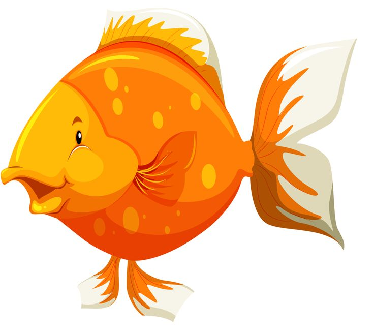 Птички и рыбки картинки для детей