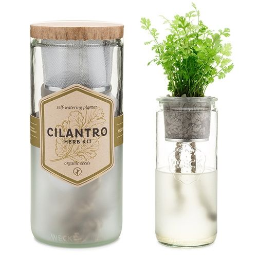 Modern Sprout Eco Planters - self-watering herb kits in weck jars with organic seeds.