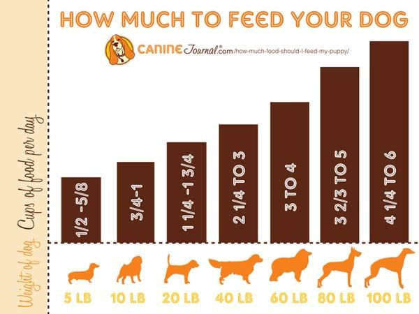 How Much Food Should I Feed My Puppy Caninejournal Com Dog Feeding Dog Food Recipes Puppies