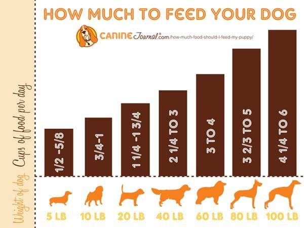 How Much Food Should I Feed My Puppy Dog Feeding Dog Food
