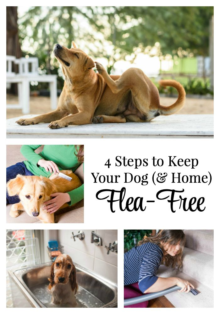 It S That Time Of Year To Start Thinking About Ways To Keep Your Dog Flea Free I M Also Sharing Ways To Keep These Parasites Out O In 2020 Dogs Your Dog Military