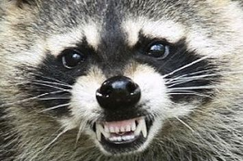 WATCH: Digg Founder Violently Hurls Wild Raccoon Down Stairs In Dog Attack